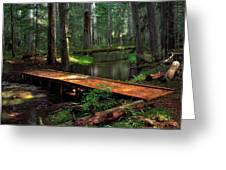 Forest Foot Bridge Greeting Card