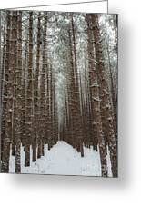 Forest In Sleeping Bear Dunes In January Greeting Card