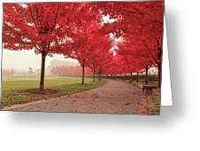 Forest Park Maple Corridor Greeting Card