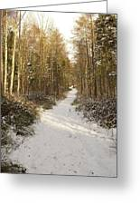 Forest Track In Winter Greeting Card