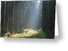 Forrest And Sun Greeting Card