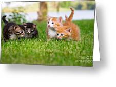 Four Little Kittens Playing In Garden Greeting Card