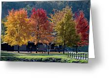 Four Tree Lineup Greeting Card by Dan Friend