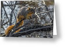 Fox Squirrel - 8988 Greeting Card