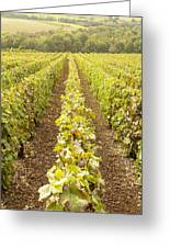 French Vineyards Of The Champagne Region Greeting Card