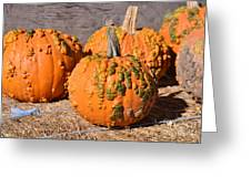 Fresh Butternut Pumpkins Greeting Card
