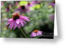 Frilly Hat Echinacea Greeting Card