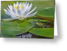 Frog And Lily Greeting Card