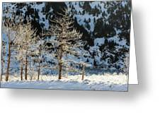 Frost Covered Trees On The Portage Glacier Highway Alaska Greeting Card