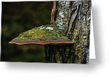 Fungi 4648 Greeting Card