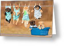 Funny Group Of American Staffordshire Greeting Card