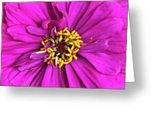 Fuschia Bloom Greeting Card