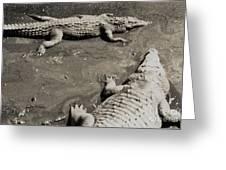 Gator  Park Residence Greeting Card