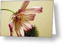 Gentle Gesture Greeting Card
