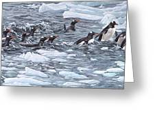 Gentoo Penguins By Alan M Hunt Greeting Card