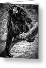 Gibbon Greeting Card