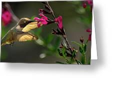 Glowing Wings Of A Hummingbird Greeting Card
