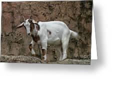 Goat Print 9245 Greeting Card