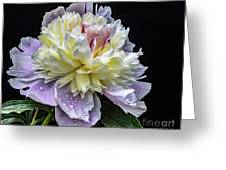 God's Perfection In A Festiva Maxima Peony Greeting Card