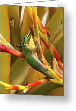 Gold Dust Gecko  Greeting Card