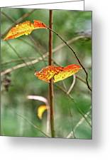 Gold Leaves And Branches Greeting Card