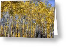 Golden Aspen Grove Greeting Card