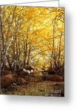 Golden Autumn Light Greeting Card