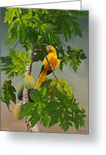 Golden Parakeet In Papaya Tree Greeting Card