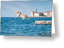 Golden Retriever Dog Jumping Into Sea Greeting Card