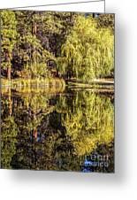 Golden Shevlin Park Greeting Card