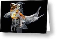 Goldfish Isolated On Black Background Greeting Card