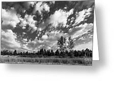 Good Harbor Shoreline Black And White Greeting Card