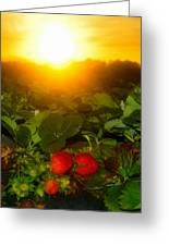 Good Morning Strawberries Greeting Card