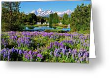 Grand Teton Lovely Lupines Greeting Card by Greg Norrell