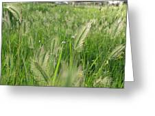 Grass Seeds The  Paddock Greeting Card