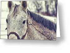 Gray On Winter White Greeting Card