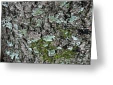 Gray Treefrog - 8522-2 Greeting Card