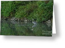 Great Blue Heron - 5922 Greeting Card