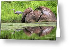 Great Blue Heron And Boulder Greeting Card