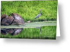 Great Blue Heron Fishing Greeting Card