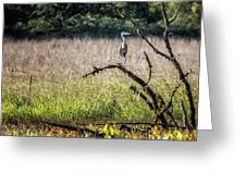 Great Blue Heron On A Snag Greeting Card