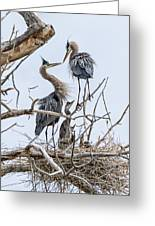 Great Blue Heron Rookery 4 Greeting Card