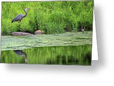 Great Blue Heron Square Greeting Card