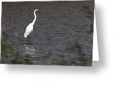 Great Egret 3211 Greeting Card