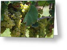 Green Grapes On The Vine 10 Greeting Card