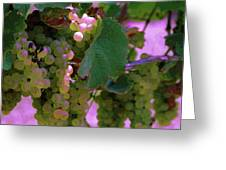 Green Grapes On The Vine 12 Greeting Card