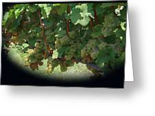 Green Grapes On The Vine 16 Greeting Card