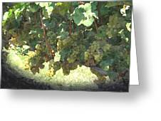 Green Grapes On The Vine 17 Greeting Card