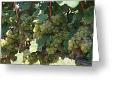 Green Grapes On The Vine 18 Greeting Card