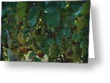 Green Grapes On The Vine 4 Greeting Card